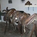 stanza cavallo